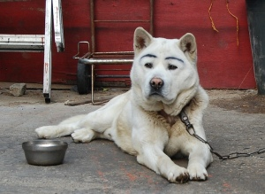 Who else would paint eyebrows on a dog?